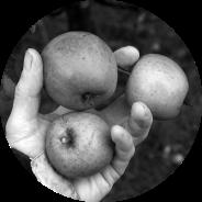 Fruit Trees in Scotland