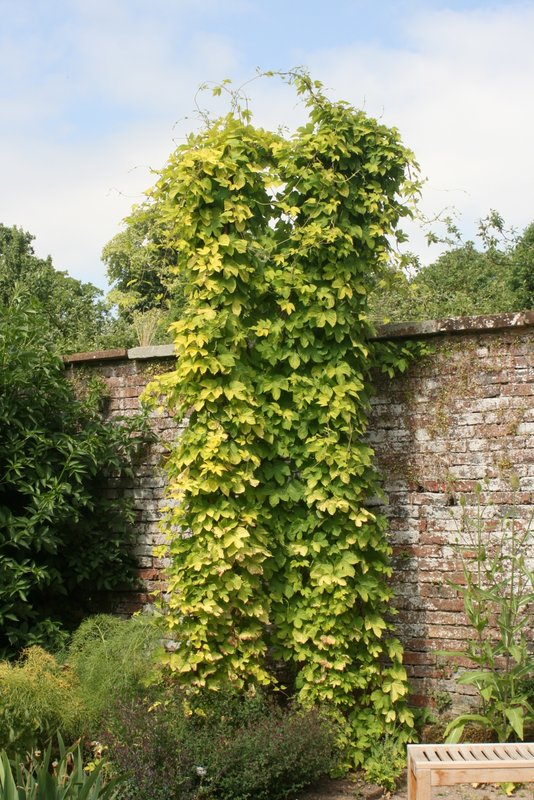 Hop Production In Scotland Plants With Purpose